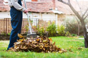 Getting Rid of Leaves: